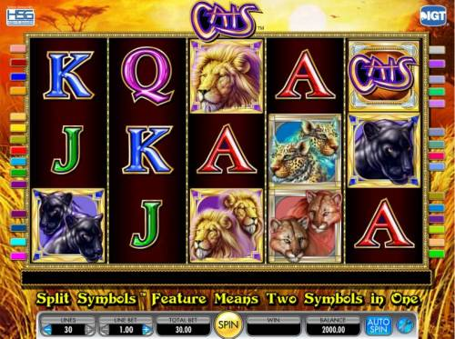 Cats Review Slots main game board featuring five reels and thirty paylines